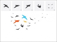 bird,animal,set,nature,flying,bird,animal,bird