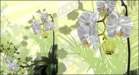 orchid,illustration,material