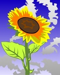 sunflower,against,blue,flower,sky,sun,plant,nature