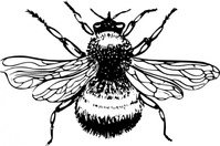 bumblebee,animal,insect,biology,zoology,entomology,black and white,line art,outline,contour,media,clip art,externalsource,public domain,image,png,svg,wikimedia common,psf,wikimedia common,wikimedia common,wikimedia common