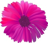 pink,flower,fuchsia,nature,media,clip art,public domain,image,png,svg