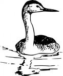 western,grebe,media,clip art,public domain,image,svg,fws,fws lineart,bird,line art,aechmophorus,occidentalis,aechmophorus occidentalis
