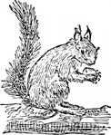 squirrel,animal,mammal,media,clip art,externalsource,public domain,image,png,svg
