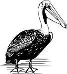 pelican,remix,animal,bird,colouring book,externalsource