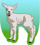 small,sheep,remix,animal,mammal,young,lamb,food