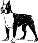 boston,terrier,animal,mammal,pet,dog,dog breed,boston terrier,biology,zoology,line art,black and white,contour,outline,media,clip art,externalsource,public domain,image,png,svg,wikimedia common,psf,wikimedia common,wikimedia common,wikimedia common