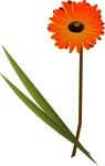 gerbera,flower,color,plant,nature,media,clip art,public domain,image,png,svg,inkscape