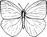 butterfly,black and white,animal,insect,biology,zoology,entomology,line art,outline,contour,media,clip art,externalsource,public domain,image,svg,wikimedia common,psf,wikimedia common,wikimedia common,wikimedia common