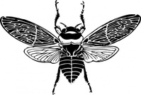 view,animal,insect,bee,media,clip art,externalsource,public domain,image,png,svg
