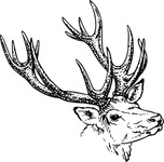 stag,head,animal,mammal,wild,antler,biology,zoology,line art,black and white,contour,outline,deer,media,clip art,externalsource,public domain,image,png,svg,antler,wikimedia common,psf,antler,wikimedia common,antler,wikimedia common,antler,wikimedia common