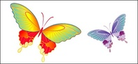 material,butterfly