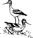 bird,animal,walking,running,media,clip art,public domain,image,svg,fws,fws lineart,line art,avocet,recurvirostra