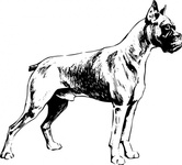 boxer,animal,mammal,pet,dog,dog breed,biology,zoology,line art,conotue,outline,greyscale,black and white,media,clip art,externalsource,public domain,image,png,svg,wikimedia common,psf,wikimedia common,wikimedia common,wikimedia common