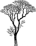 bare,tree,plant,barren,media,clip art,externalsource,public domain,image,png,svg