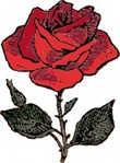 rose,plant,flower,nature,colour,red,media,clip art,externalsource,public domain,image,png,svg
