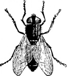 insect,media,clip art,public domain,image,png,svg,animal,fly,bug,housefly
