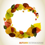 autumn,background,circle,color,colour,follow,leaf,retro,wind