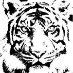 Free Download Of Printable Tiger Stripe Stencil Vector Graphics And Illustrations