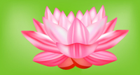 flower,lotus,flower vector,lotus flower,water lily