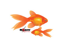 fish,gold fish,animal,realistic,rajeev,kamal