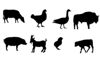 farm,animal,buffalo,goat,chicken,duck,chick,pig