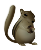 fat happy  chipmunk with nut