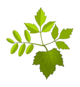 leaf,foliage,green,nature,leaf