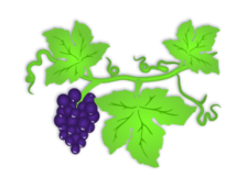 grape,wine,fruit,purple,green,leaf,vine,drink,alcohol,dark,grape,fruit,leaf