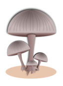 mushroom,fungi,science,biology,food,public,domain,mushroom,svg,png,clip-art