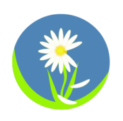 flower,daisy,stem,white,yellow,green,blue,round,cartoon,illustration,love