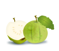 guava,fresh fruit,green fruit,natural food,vegetarian,healthy food,myrtle,green apple guava,guava,fresh fruit,green apple guava