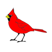 cardinal,bird,remix,1