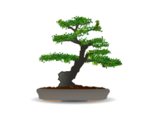 bonsai,japan,japanese,garden,plant,tree,culture