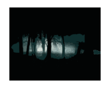 forest,night,dark,black,gothic,landscape