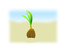 coconut seed germination,coconut,coconut plant,beach coconut,sand,nature,natural,sapling,birth,growth