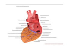 media,clip art,unchecked,public domain,image,png,svg,human heart,posterior view,medical,anatomy