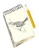 remix,sketch,drawing,art,bird,sketchpad,pad,pencil,clip art,media,public domain,image,png,svg