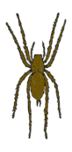 animal,insect,spider,media,clip art,externalsource,public domain,image,png,svg