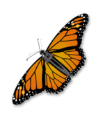 color,animal,nature,butterfly,monarch,insect