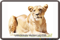 animal,lion,nature,wildlife,female,wild animal,lioness,female lion