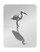 heron,cattle egret,bird,water,black and white,vector